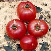 German_Johnson_Tomato
